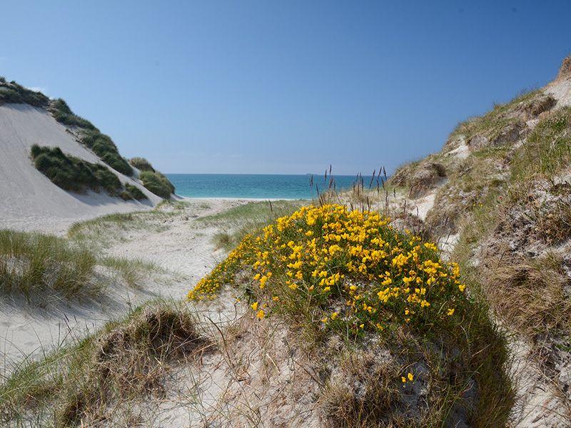Blumen Sandstrand Mco Sailing