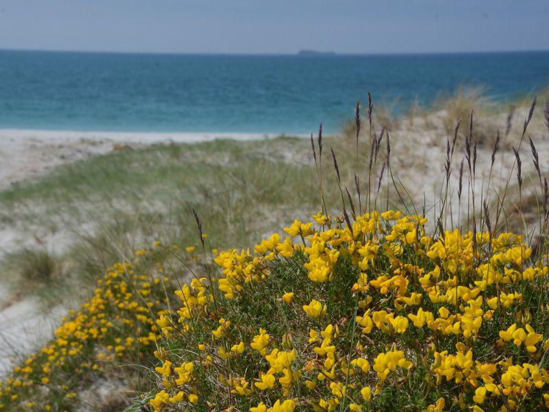 Blumen Strand Mco Sailing
