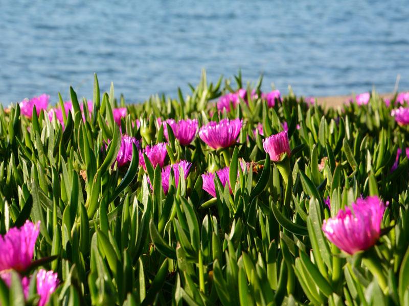 Blumenwiese 1 Mco Sailing