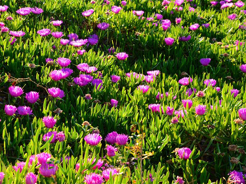 Blumenwiese 3 Mco Sailing