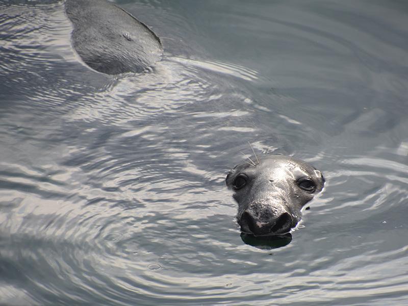 Seeloewe Wasser Mco Sailing