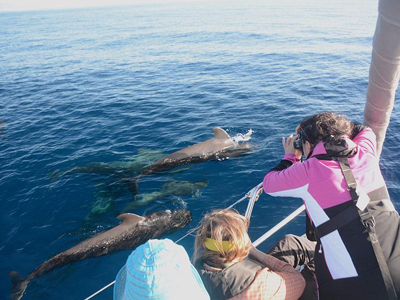 Delfine Beobachten Segelboot Mco Sailing